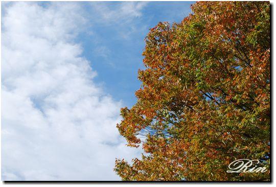 綺麗な青空と紅葉