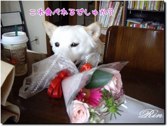 花って食べれるの?
