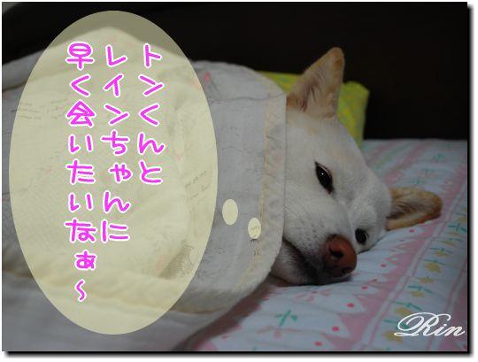 いい夢みてね~