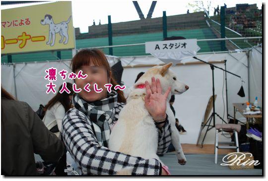 愛犬撮影コーナー