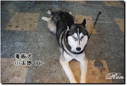看板犬の小太郎くん♪