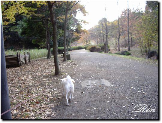 公園の緑道をテクテク