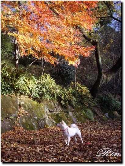 綺麗な紅葉の木が一本ありました♪