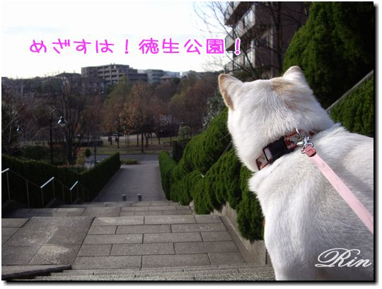 めざすは!徳生公園!