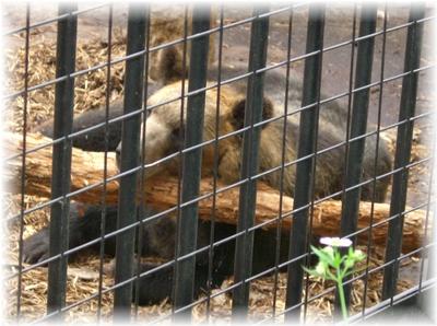 動物園 クマ