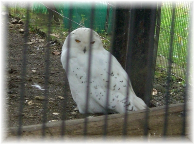 動物園 フクロウ