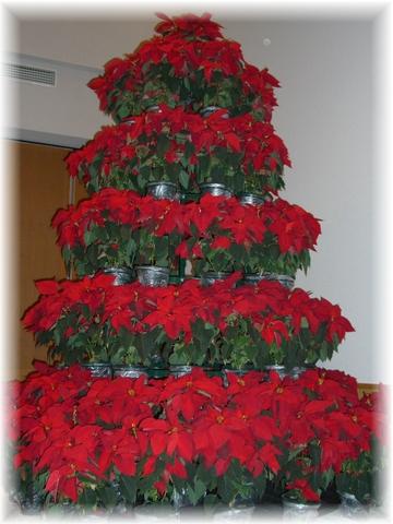 20081212 クリスマスツリー-2