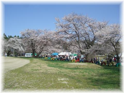 20090418 久保の桜 1
