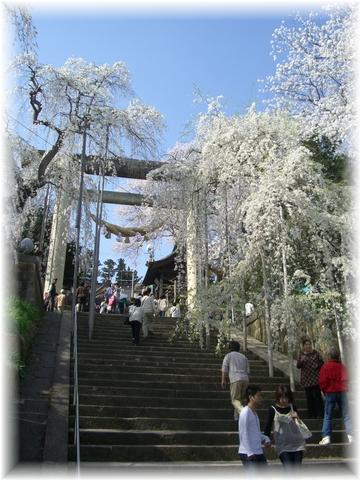 20090419 えぼし山 6
