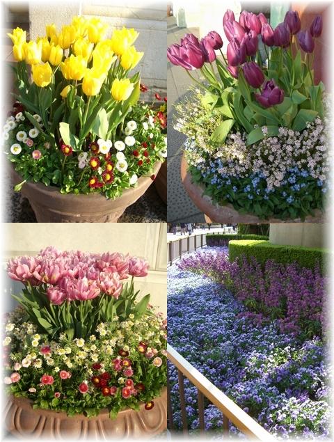 20090330 花