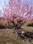 綺麗な花の木の下で!