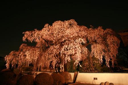 広琳寺の夜桜