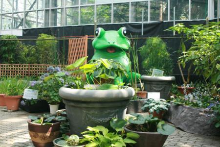 スイレンと水辺の植物展