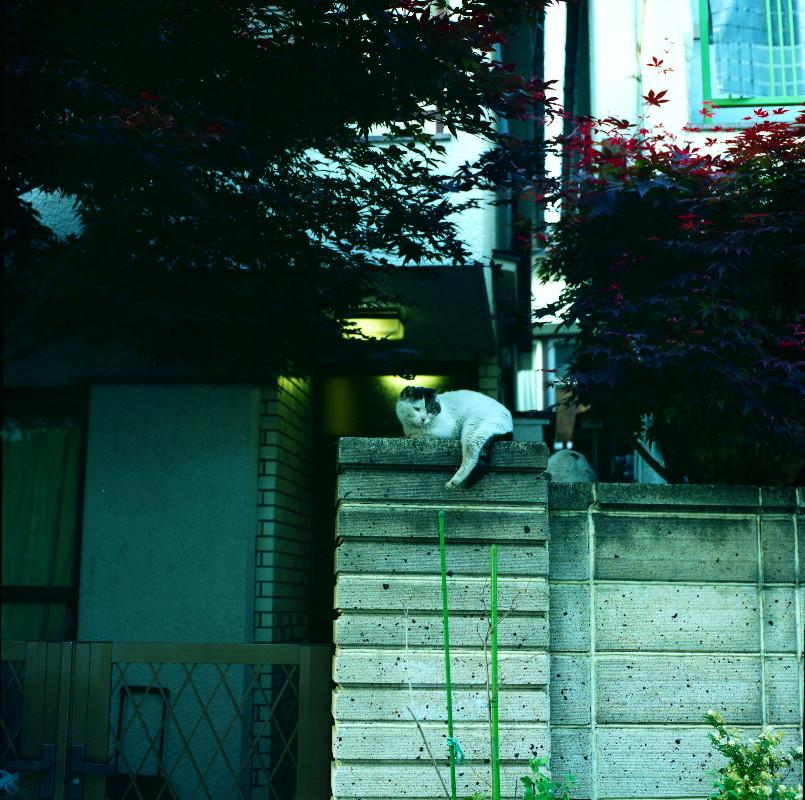 2008052001_1.jpg