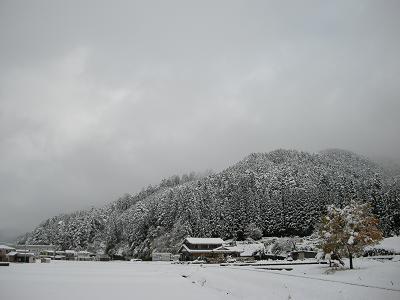 初雪2008 007