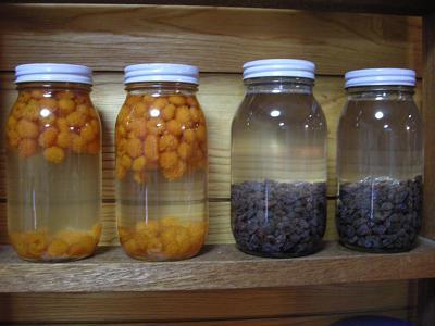 モミジイチゴ酵母 006
