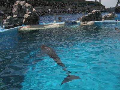 2009.7.19名古屋港水族館 015