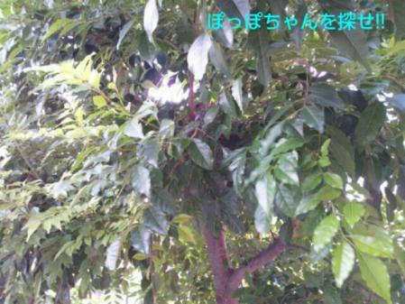 20110917_115412_20110920191213.jpg