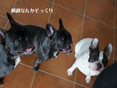 10_20111121102526.jpg