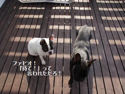 12_20120308211833.jpg