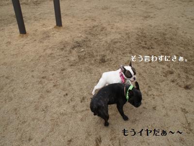 16_20120310215841.jpg