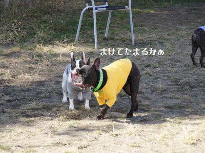 22_20111121102614.jpg