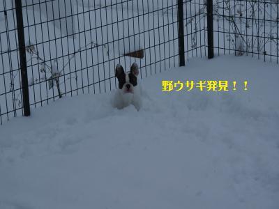 4_20120305130412.jpg