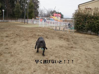 5_20120310215757.jpg