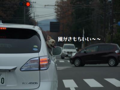6_20111129122716.jpg