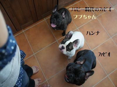 9_20111122210631.jpg