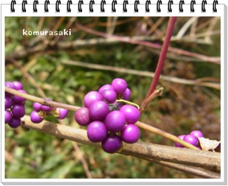 komurasaki_convert_20111115165900.jpg