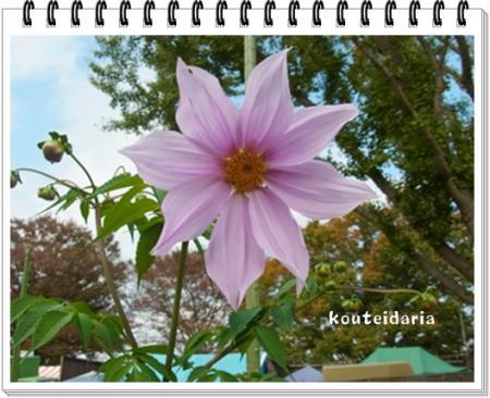 kouteidaria_convert_20111115170012.jpg