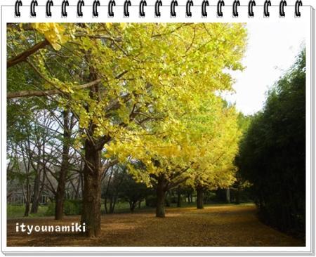 kouyou2_convert_20111115170110.jpg