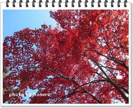 kouyou4_convert_20111115175119.jpg