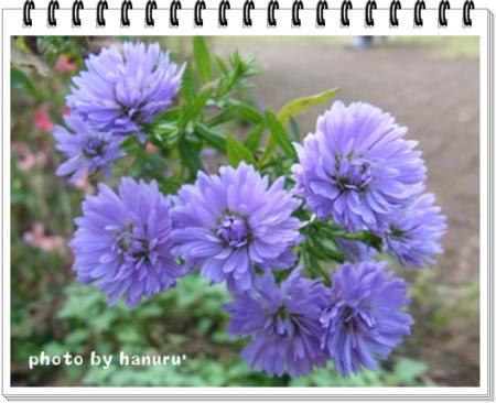 kouyou8_convert_20111115175214.jpg