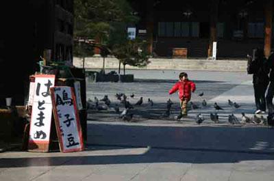 京都東寺の鳩