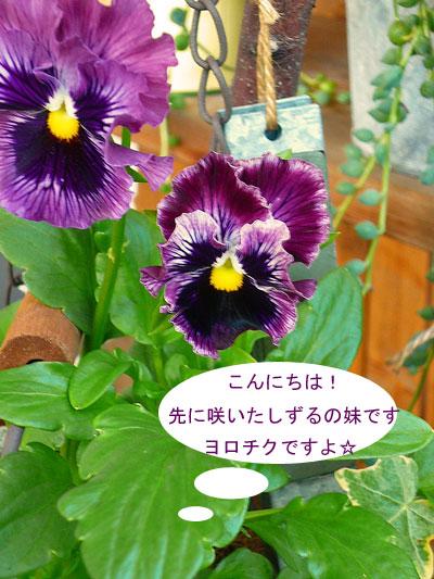 P1030594.jpg