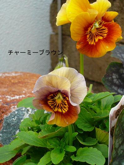 P1030694_edited-1.jpg