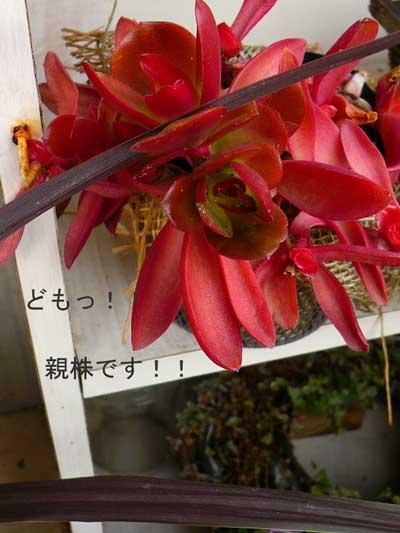 P1040691_edited-1.jpg