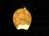 卵のライト