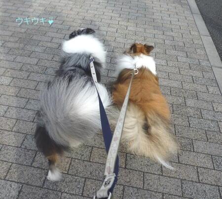 お散歩、お散歩、嬉しいなあ~!!