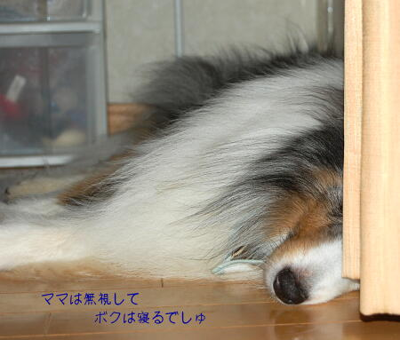 寝ちゃうでしゅ