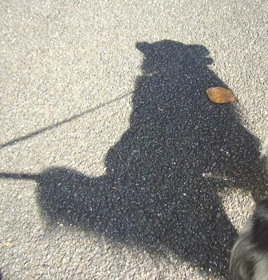影が好き(^m^*)