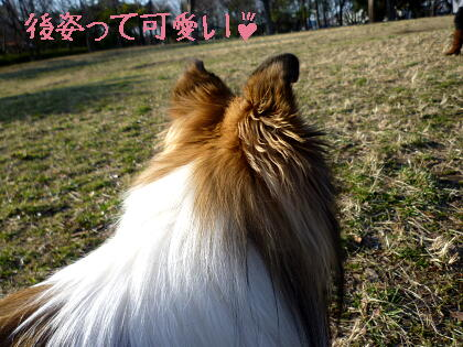 この耳の感じがたまらん(*^m^*)