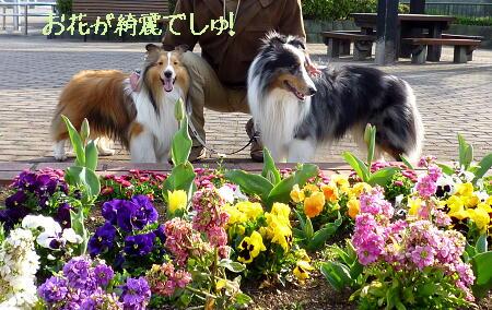 お花がたくさん\(^O^)/