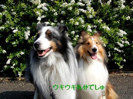 笑顔(*^m^*)
