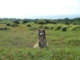 石垣の牧草地で