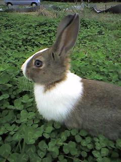 野ウサギ♪