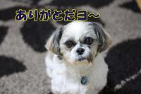 002_20081231184005.jpg