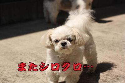 002_20090409144312.jpg